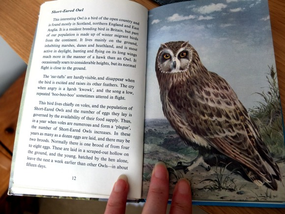 Ladybird book short-eared owl entry